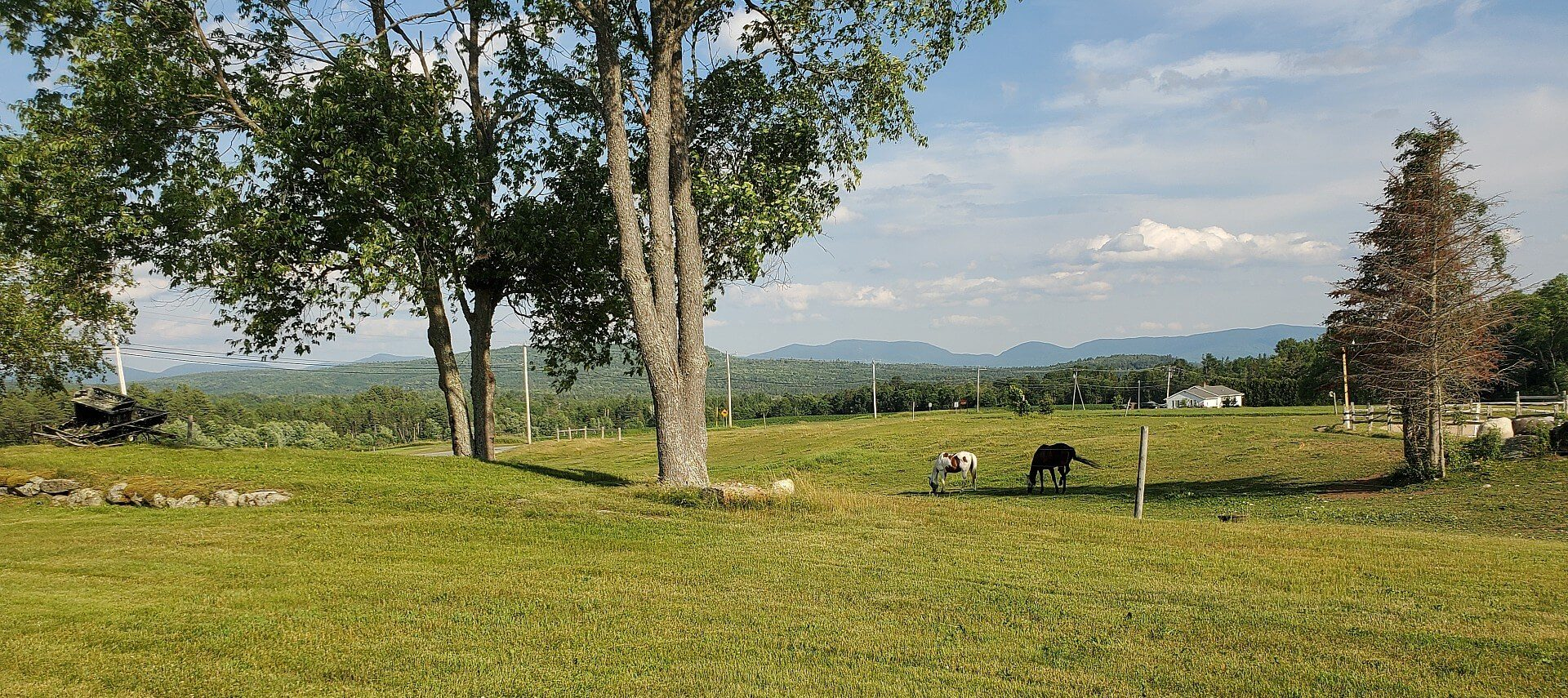 Wide open lawn space with two horses, tall trees and mountain range in the background