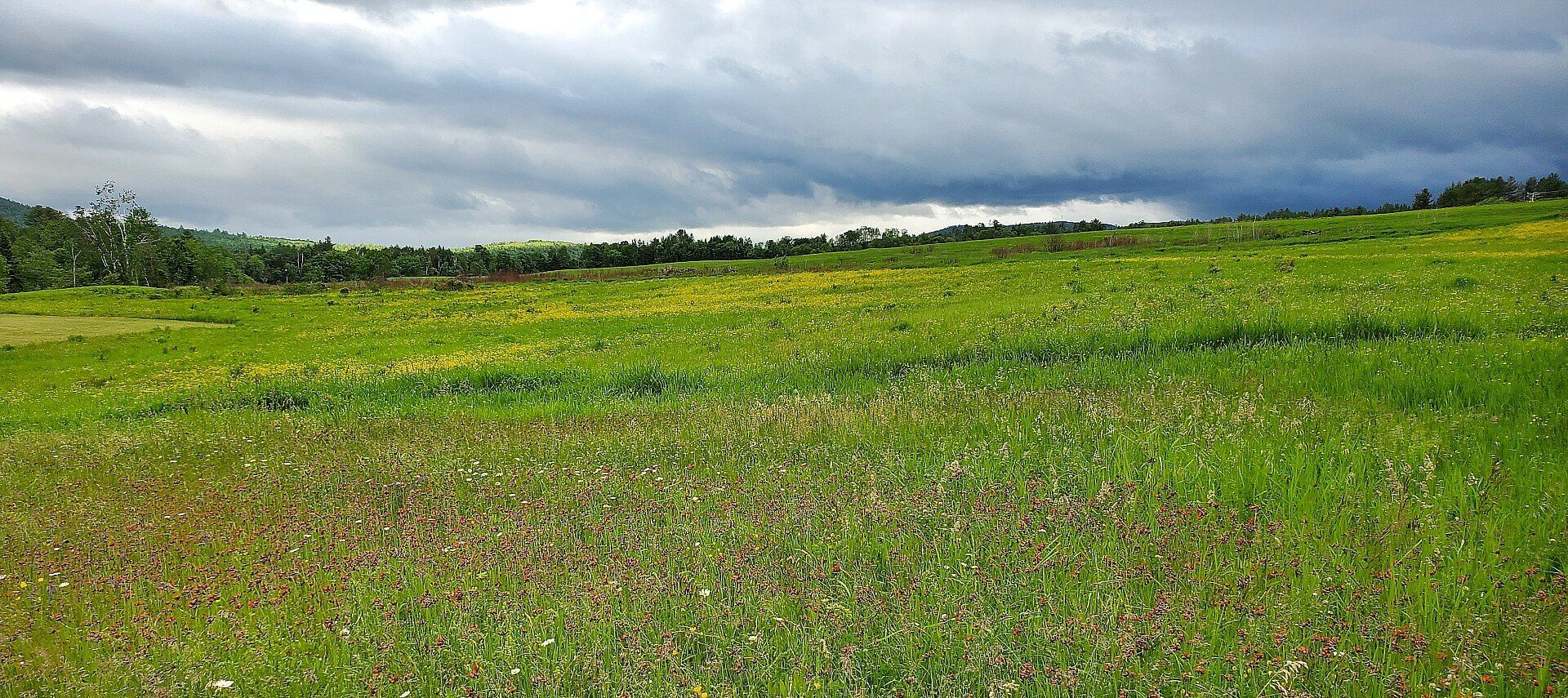Wide open space of green grass and wild flowers with cloudy skies above